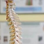 3d model of spine